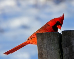bird-107802_640